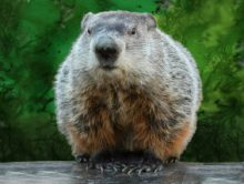 Punxsutawney Phil would predict that more states will seek to adopt Market-Based sourcing as the potential benefits are analyzed.
